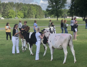 4-H dairy judging contest in Polk County, WI