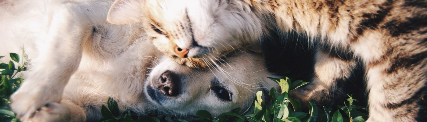 Dog and cat playing together in the grass.