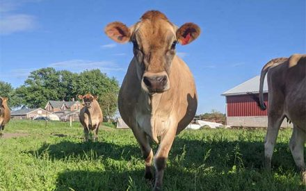 Wisconsin 4-H Foundation Beef Exhibitor Highlight Contest